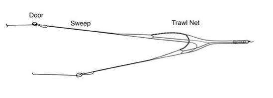 Typical trawl diagram