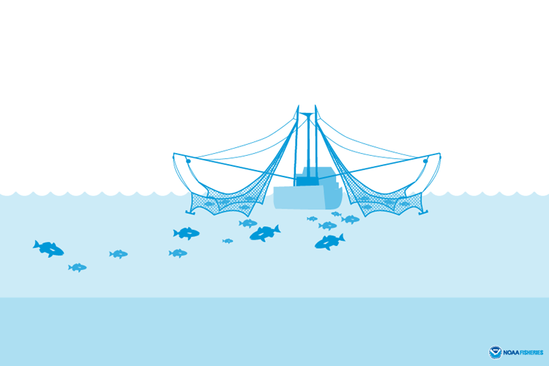 Skimmer trawl illustration