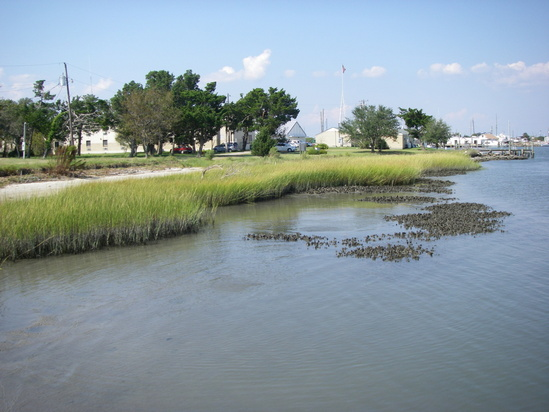 The NOAA Beaufort Lab aka NCCOS Center for Coastal Fisheries & Habitat Research_Pivers Island Beach Marsh 1.jpg