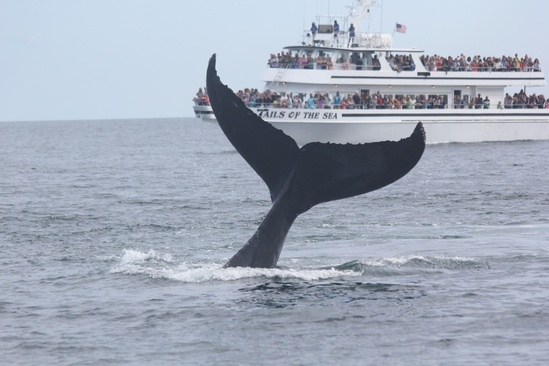 Boat with whale