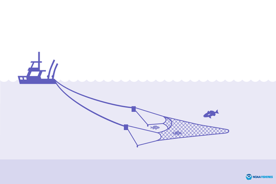 Midwater trawl illustration