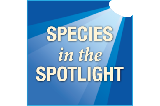 Species in the Spotlight logo.