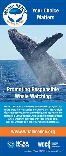 whalesense-display-rack-card-sm.jpg