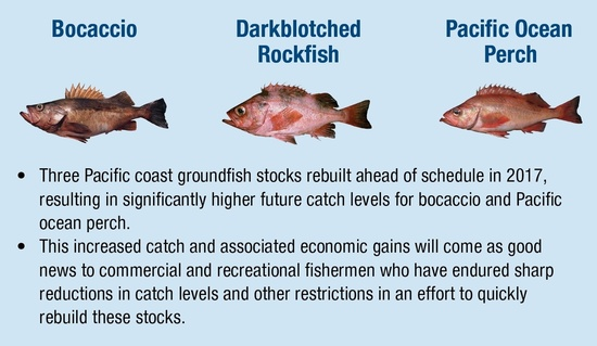 Photos of 3 rebuilt stocks: darkblotched rockfish, bocaccio, and Pacfic ocean perch