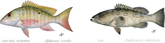 fish-LANAL-MMICR-illustration-in-lineDP.jpg