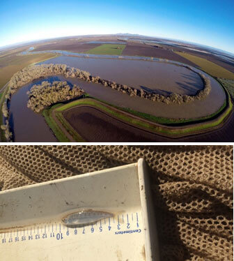 Aerial view of Bullock Bend and image of salmon smolt measuring about 6 centimeters