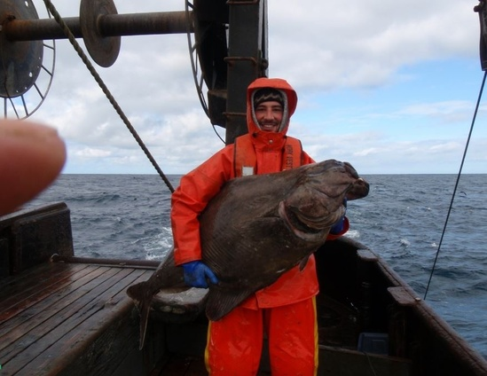 nwfsc-feature-pacific-halibut.jpg