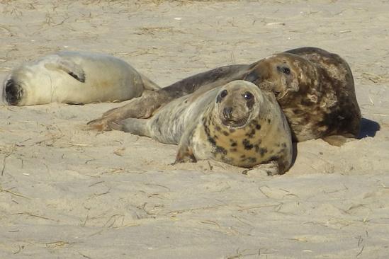 gray-seal-family-muskeget.jpg