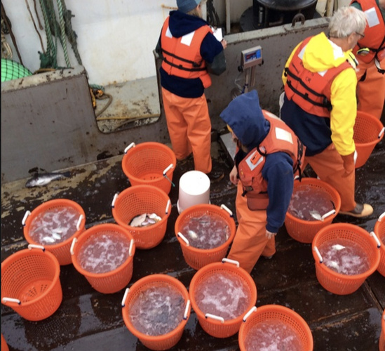 A catch of mostly water jellies and only a few fish from a 2015 research survey off West Coast.jpg