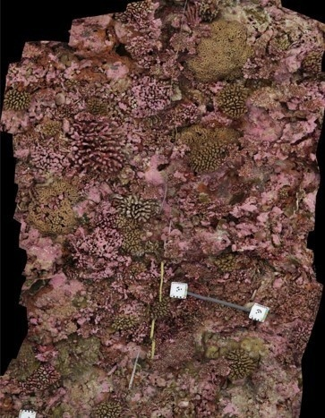 3D model of reef tract from mosaic of 2D images.
