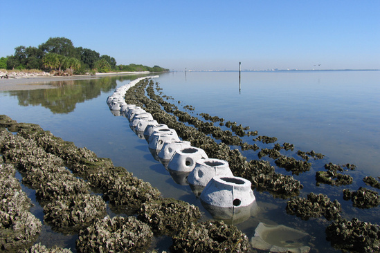 mulberry hazardous waste spill new oyster living shoreline 2272x1514 credit Tampa Bay Watch.jpg