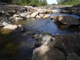 Fish Migration - Penobscot River.png