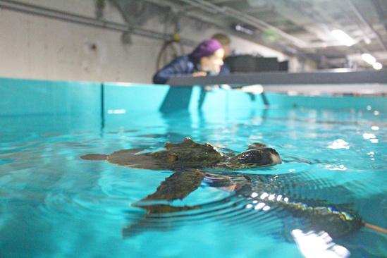 whsa-turtle-pool-peek-a-boo.jpg