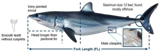 Diagram of shortfin mako sharks
