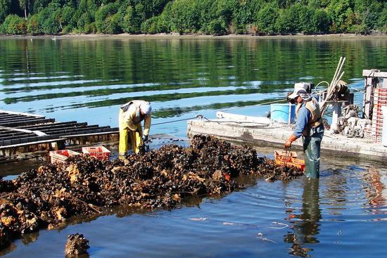 750x500-mussel-harvest.jpg