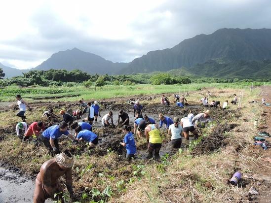Staff and volunteers of TNC and Kākoʻo ʻŌiwi restore loʻi kalo (taro patch) in Heʻeia, O'ahu. Credit: TNC.