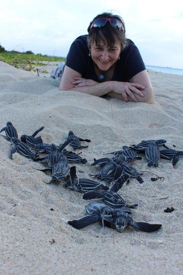 Donna-Wieting-turtle-hatchlings.jpg