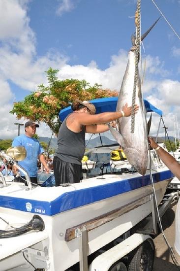 Tournament participant guides large pelagic catch onto fishing boat.