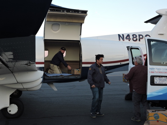 loading sea turtles into plane for transport south OPR2.jpg
