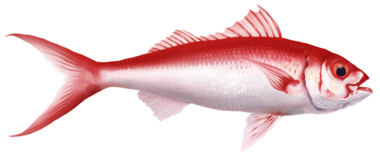 Flame snapper
