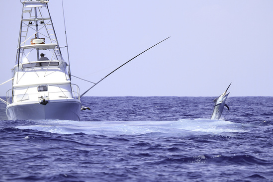 Game fishing boat fighting a marlin