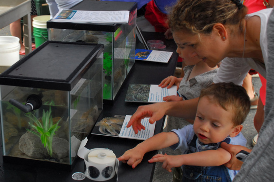 Mom and children view animals in small tanks