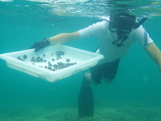 Cape Flattery Coral Restoration Sea Urchin Diver 3757x2825 NOAA Fisheries Matthew Parry.jpg