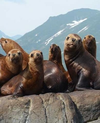 Seals crowded on a rock.