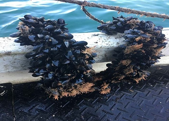 700x500blue_mussels.jpg