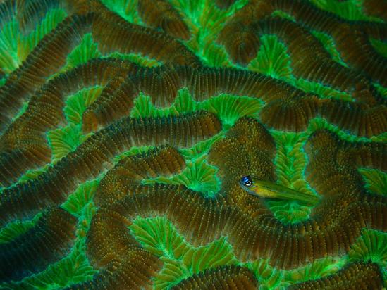 FishEcology2.jpg