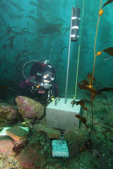 noaa_diver_melissa_neuman_inspecting_acoustic_receiver photo david witting NOAA.jpg