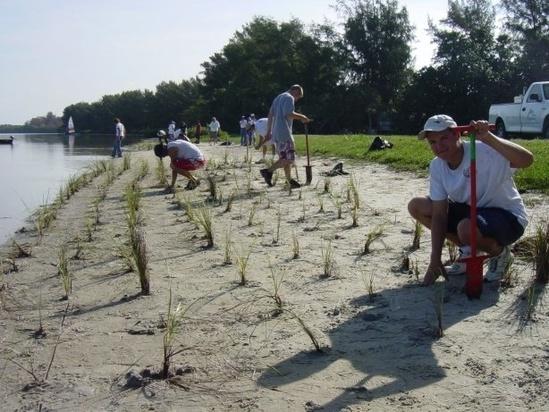 Coastalresiliency pic 3marshplanting.jpg