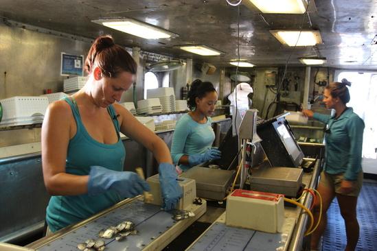 Women measuring fish