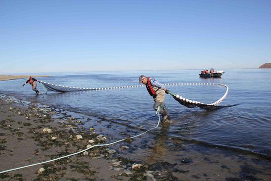 Veteran interns and NOAA staff pulling beach seine to sample fish.