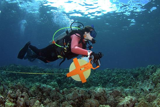 Marine Option Program student transect with equipment underwater.
