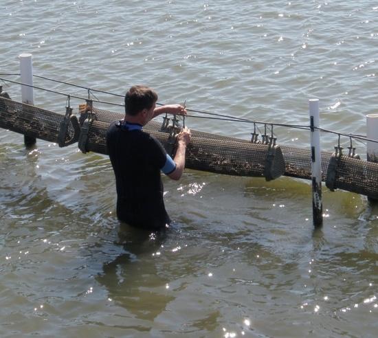 Bill Walton - oyster pic.jpg