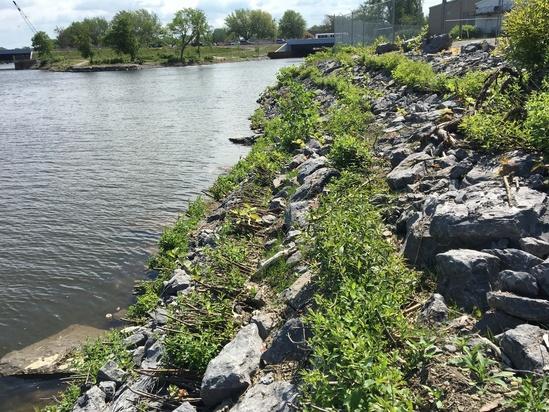 Buffalo River Old Bailey Woods Shoreline stabilization .jpg
