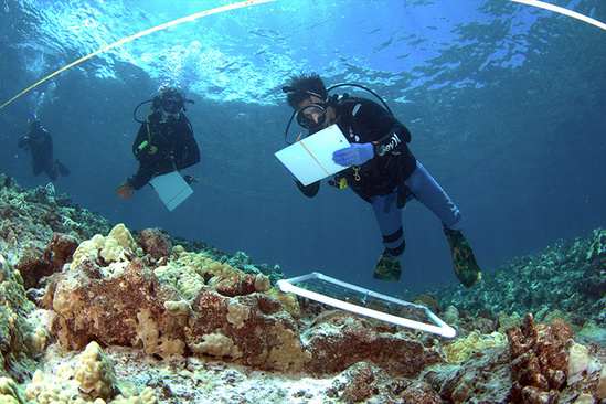 Marine Options Program students taking notes underwater.