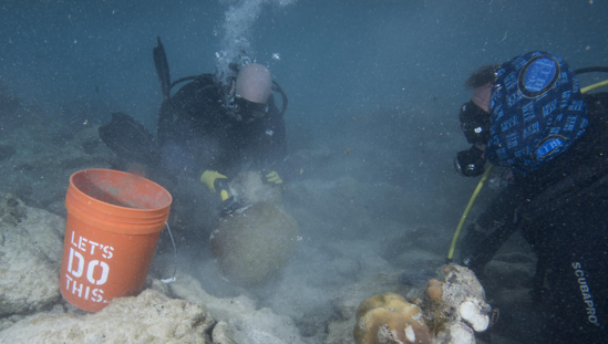 Divers triaging coral; clean off dead sections and prep fragments to reattach.