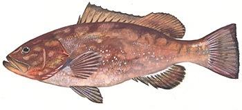 fish-image-EMORI.jpg