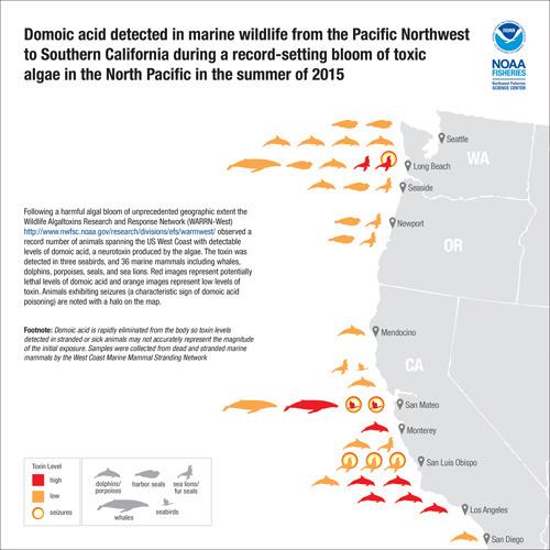 nwfsc-feature-toxins-marine-mammal-inforgraphic.jpg