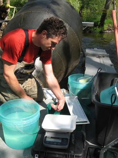 scientist-measuring-salmon-smolt-NOAA-NWFSC.jpg