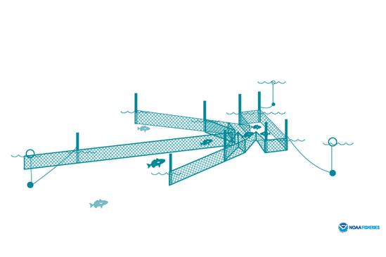 Pound net illustration