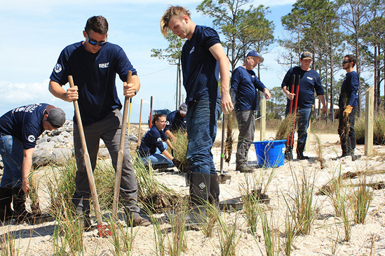 A group of people planting vegetation on a shore