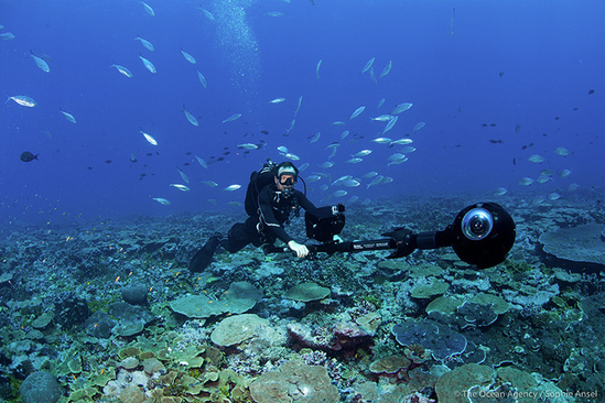 Underwater photographer filming Palmyra reef for reality film.