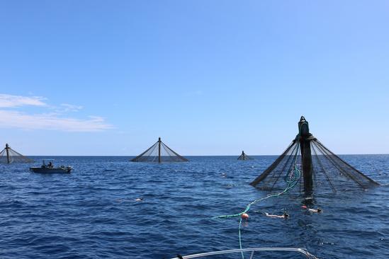 Blue Ocean Mariculture Pens 2.jpg