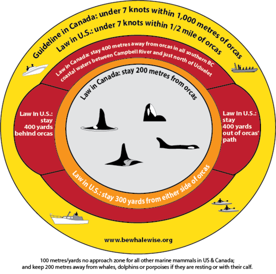 Bewhalewise guidelines graphic