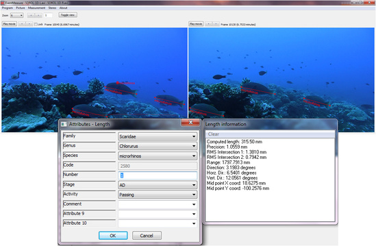 Example of stereo-video analysis and output of fish measurements.