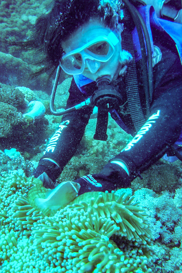 Scuba diving in ocean with sea anemones, corals, and clown fish.