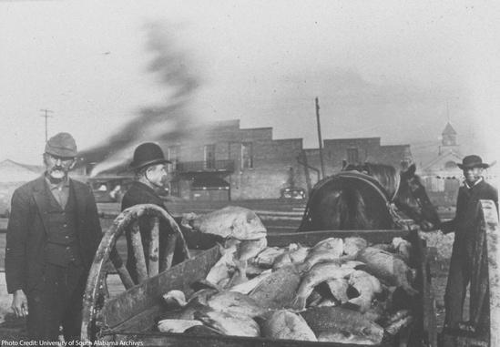 historic-photo-gulf-fish-landed-1890-UofSA-NMFS-SERO.jpg